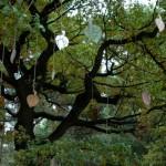 Patricia Van Vlierden - Een oude boom ... (2008)